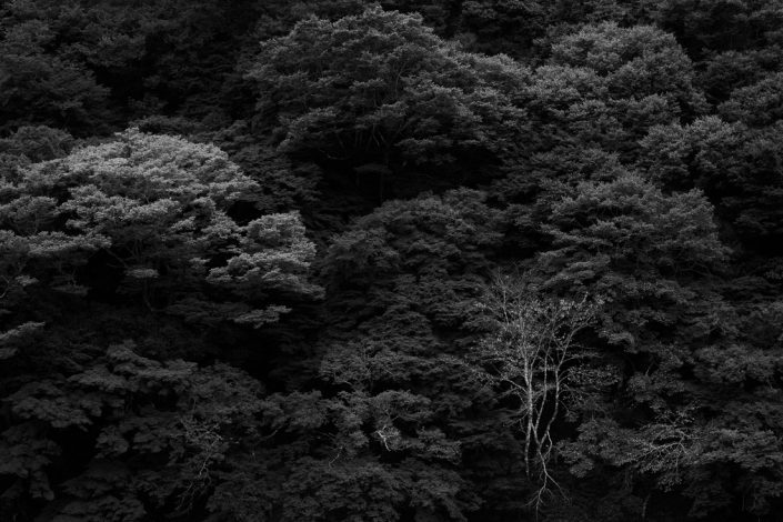 Kyoto, Japan, 2017
